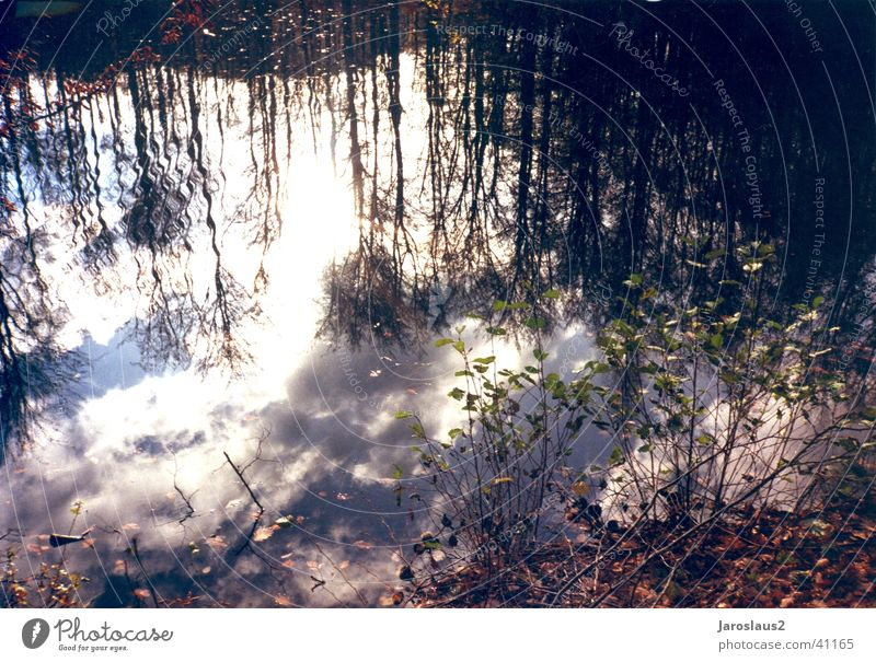 Wolken im Wasser Baum Herbst Reflexion & Spiegelung Himmel Küste