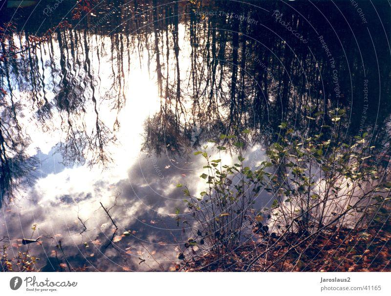 Wolken im Wasser Himmel Baum Herbst Küste