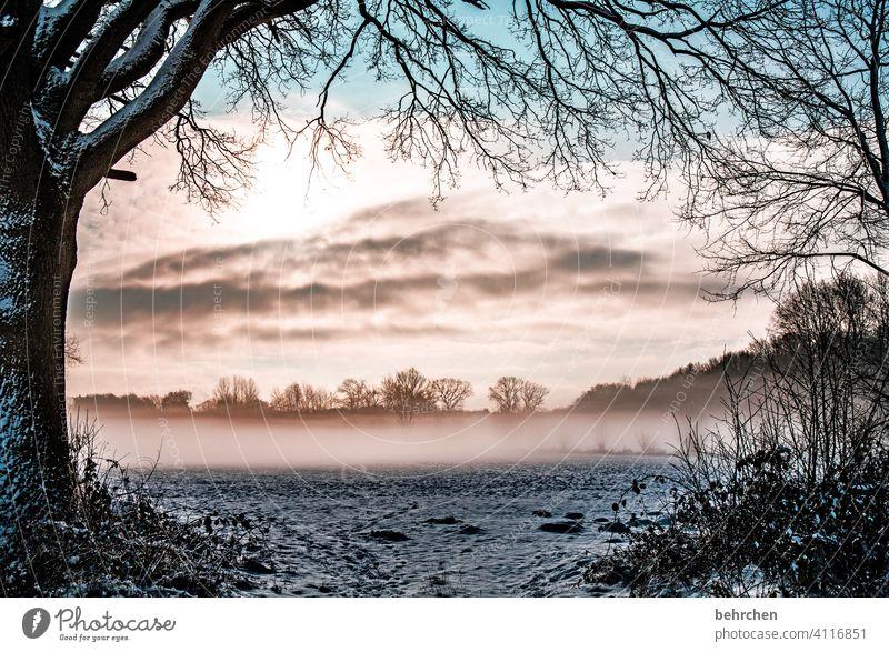 geheimnisvoll Farbfoto Klima traumhaft Märchenwald Nebel Wintertag Schneedecke Winterspaziergang idyllisch verträumt Märchenhaft Schneelandschaft schön träumen