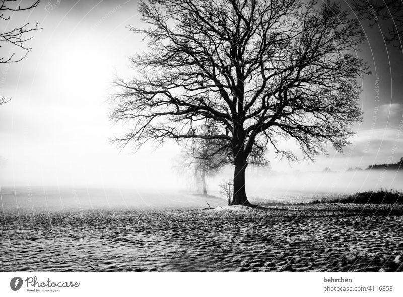 winterschlaf Schatten mystisch geheimnisvoll idyllisch verträumt träumen schön Außenaufnahme Klima Nebel Schneedecke Landwirtschaft Baumstamm Äste und Zweige