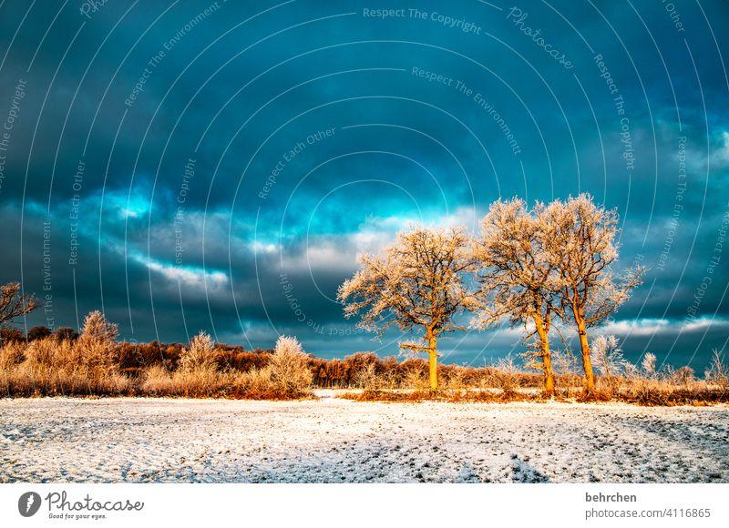 winterpunk Winterwald Märchenwald Baumstamm Äste und Zweige Klima traumhaft träumen schön verträumt idyllisch Schneedecke Schneelandschaft Heimat Acker