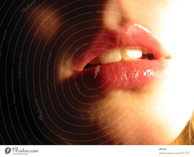 Mund Frau rot feminin Lippen