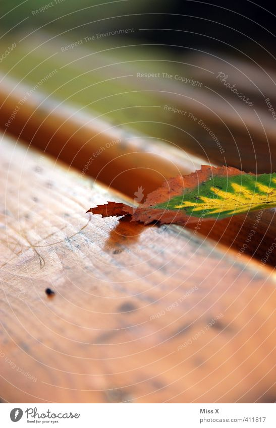 A Bladl Herbst Blatt dehydrieren Herbstlaub Buchenblatt Herbstfärbung Parkbank Holzbrett herbstlich Herbstbeginn liegen Farbfoto Außenaufnahme Nahaufnahme