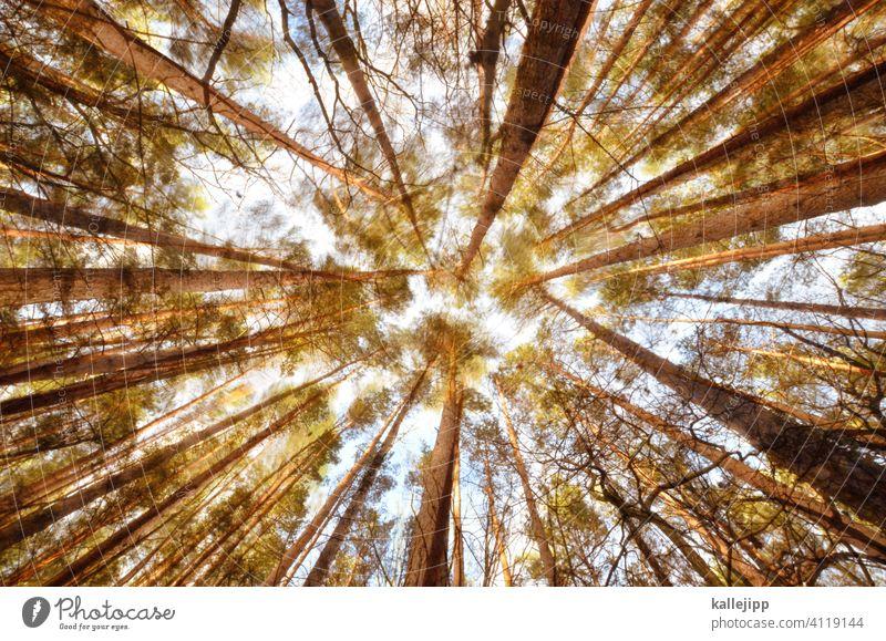 rauschender wald Wald Bäume Bewegung Bewegungsunschärfe Baumstamm Froschperspektive wackeln Kiefer Stamm dicht Lichtung Natur Außenaufnahme grün Farbfoto Umwelt