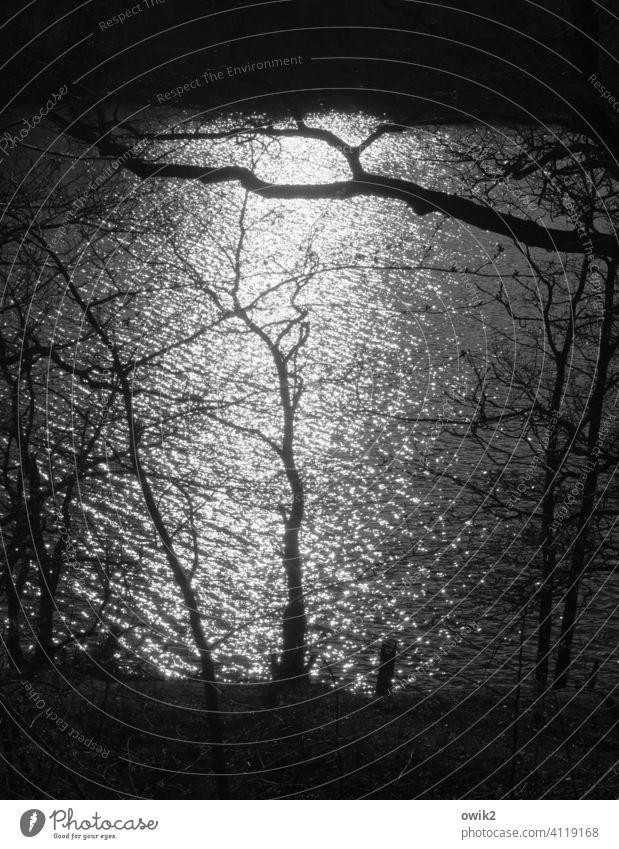 Tief unten Außenaufnahme mystisch Silhouette funkelnd hell Licht Wasser gleißend glitzernd Schatten Natur Kontrast Bäume Lichterscheinung Gegenlicht