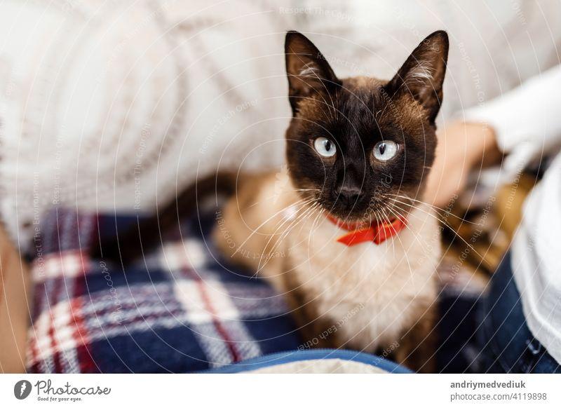 Lustige Katze mit einer roten Fliege Nahaufnahme. Katze mit Schmetterling. Katze mit Augenfehler. Das Konzept der modischen Katzen. Tier Katzenbaby Kätzchen
