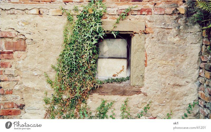 Fenster Mauer Ranke grün Wand Backstein Haus Dinge alt