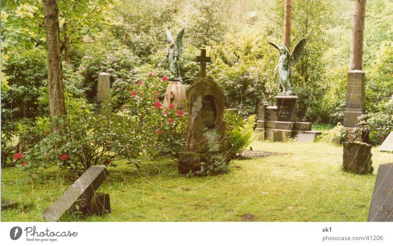 Buntes treiben auf dem Friedhof grün Grabstein Blühend Pflanze