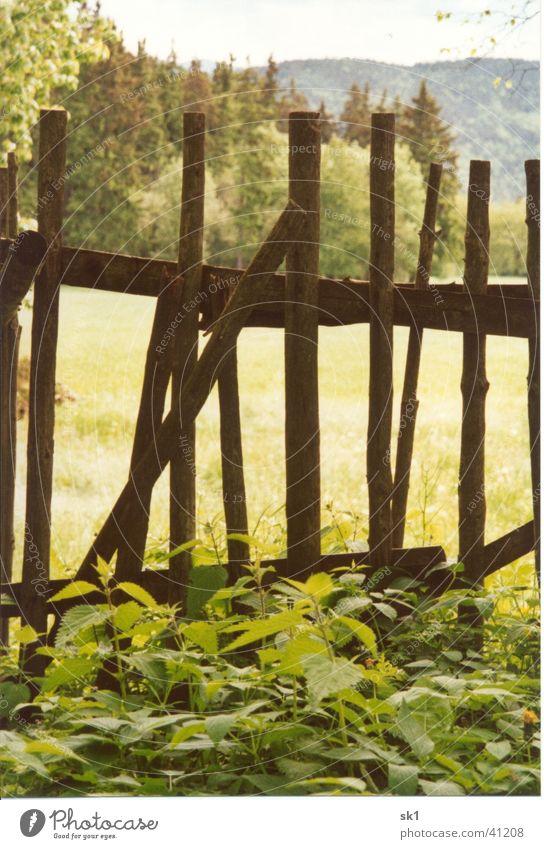 At the old old fence Natur alt grün Holz braun Dinge Zaun Heilpflanzen Brennnessel Unkraut