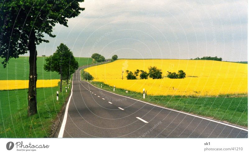 Landstraße mit Rapsfeldern Natur Himmel Baum grün blau gelb Straße Farbe Wiese Blüte Gras Berge u. Gebirge Landschaft Linie Feld