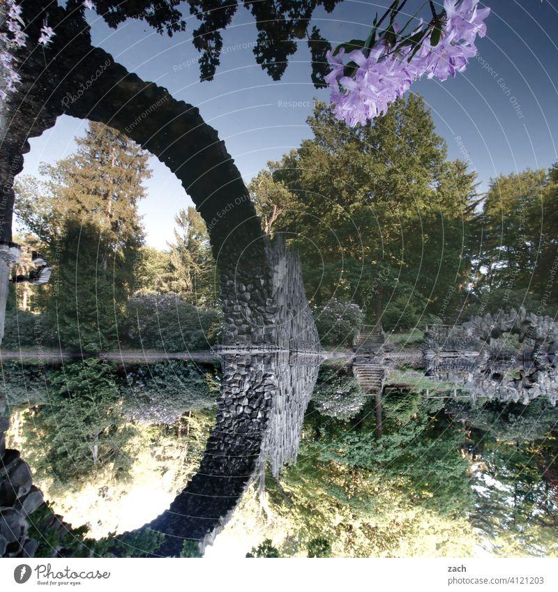 Rakotzbrücke Rakotzsee Kromlau Kromlauer Park Brücke Steinbrücke See Wasser Teich Rhododendron Rhododendronpark Spiegelung Reflexion & Spiegelung Baum Frühling