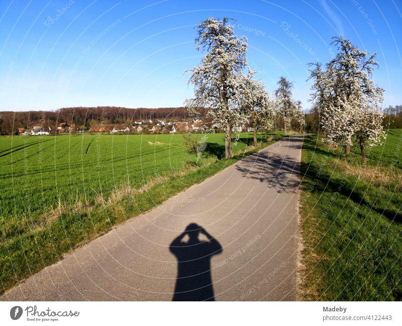 Schatten des Fotografen im Frühing bei Sonnenschein auf der Apfelstraße in Währentrup bei Oerlinghausen am Teutoburger Wald in Ostwestfalen-Lippe Apfelbaum