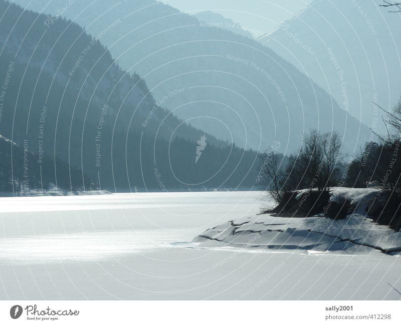 still und starr ruht der See... Natur Landschaft Winter Eis Frost Schnee Baum Seeufer Achensee glänzend kalt Einsamkeit stagnierend Überleben schneebruch ruhen
