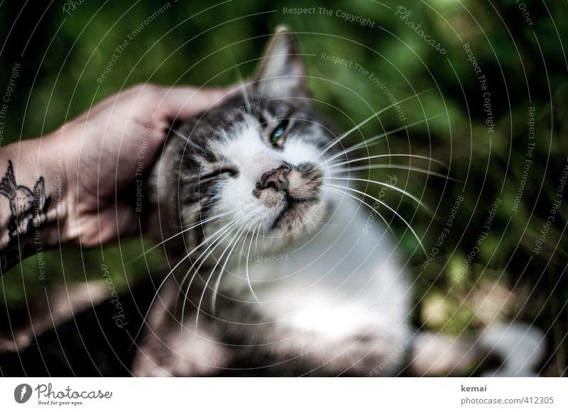 AST6 Inntal | Purer Genuss Katze schön grün Hand ruhig Tier Gefühle Spielen Freundschaft Zusammensein Zufriedenheit authentisch Lebensfreude Vertrauen Haustier