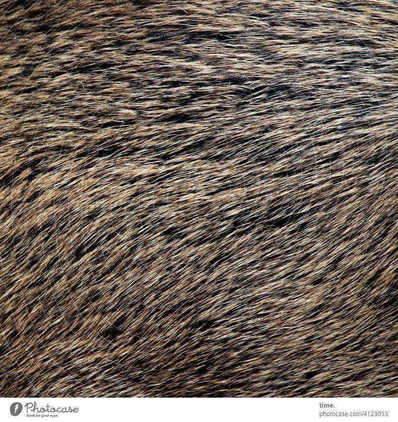 Lebenslinien #141 wildschwein fell borsten wildtier struppig haar tierhaar muster struktur fließend braun schwarz