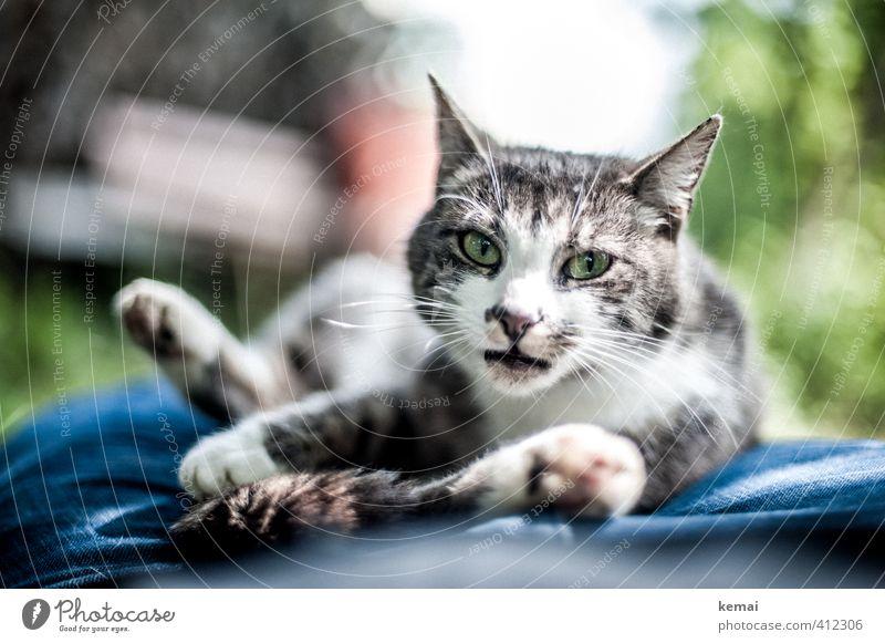 AST6 Inntal | Bequem gemacht Katze schön grün Erholung ruhig Tier Auge außergewöhnlich Freundschaft liegen niedlich Fell Jeanshose Vertrauen Tiergesicht