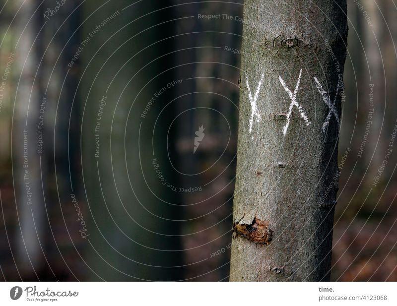 Kreidezeit Baum wald zeichen symbol x baunstamm rätsel Buchstabe kreide schrift auffällig botschaft information