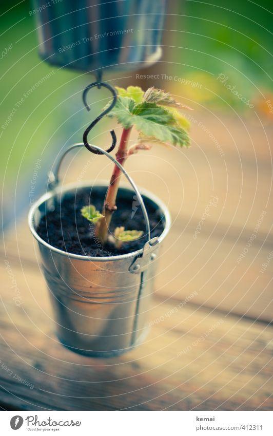 AST6 Inntal | Tischdeko Dekoration & Verzierung Tischdekoration Erde Pflanze Blatt Grünpflanze Eimer Haken Holz Metall hängen Wachstum klein niedlich Leben