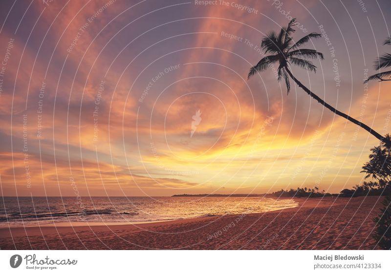 Tropischer Strand bei einem schönen bunten Sonnenuntergang, Sri Lanka. Paradies Handfläche Kokosnuss Sand Sommer reisen Natur Wasser MEER golden Meer Insel Baum