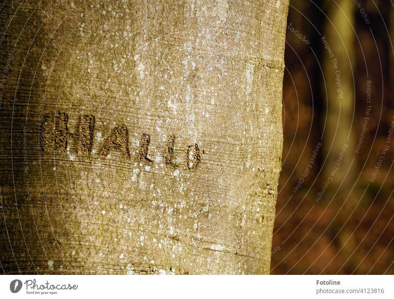 """""""HALLO"""" hat jemand in den Baum geritzt. Baumstamm Baumrinde Natur Wald Außenaufnahme Farbfoto Menschenleer Tag Umwelt Pflanze braun natürlich Holz"""