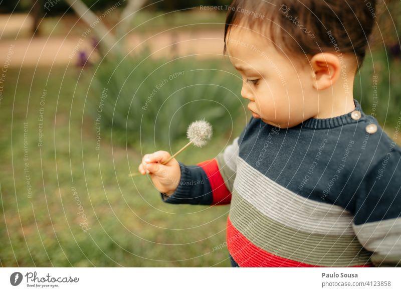 Nettes Kind schaut auf Löwenzahn Kaukasier 1-3 Jahre Natur natürlich Frühling Glück Kleinkind Farbfoto Außenaufnahme Kindheit Mensch Tag Fröhlichkeit Freude