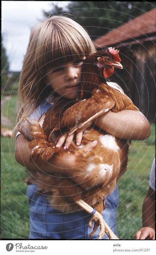Kuschelhuhn Kind Mädchen Bauernhof fangen festhalten Haushuhn tragen Kuscheln Trophäe