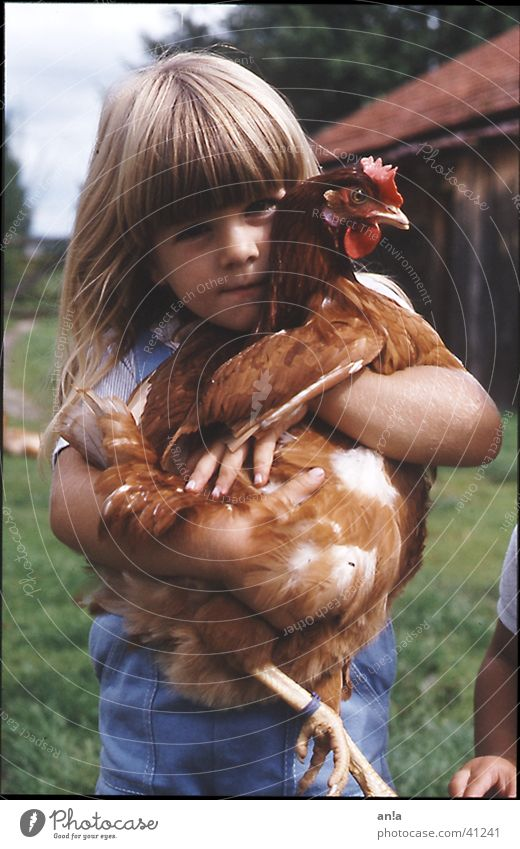 Kuschelhuhn Mädchen Haushuhn Bauernhof Kind Kuscheln festhalten fangen Trophäe tragen