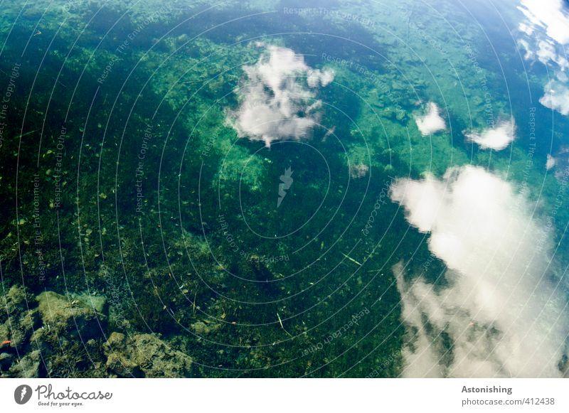 Wolken im Wasser Umwelt Natur Luft Himmel Sommer Pflanze Grünpflanze Wildpflanze Fluss Donau Stein nass blau grün türkis weiß Reflexion & Spiegelung