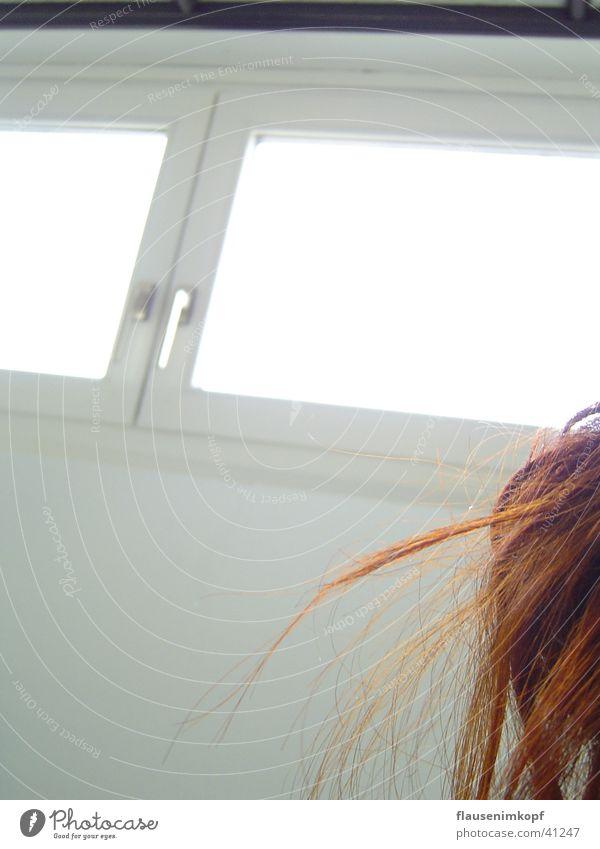 haarig! rot Fenster weiß Wand Momentaufnahme Haare & Frisuren wilder Dutt