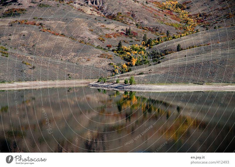 Lebensader Umwelt Natur Landschaft Pflanze Wasser Baum Sträucher Hügel Seeufer braun gelb Klima Wege & Pfade Colorado Herbst herbstlich Farbfoto Außenaufnahme