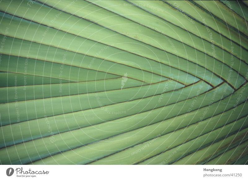 Palme Muster grün Pflanze