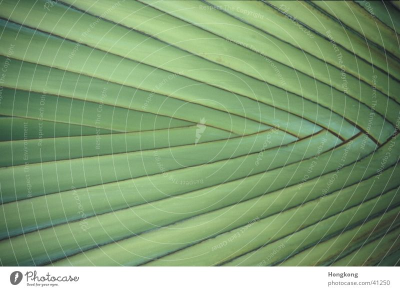 Palme Muster Pflanze grün