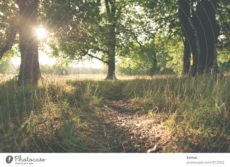 One fine evening Natur schön grün Pflanze Sommer Sonne Baum Landschaft ruhig Umwelt Wärme Gras Wege & Pfade natürlich Stimmung Park