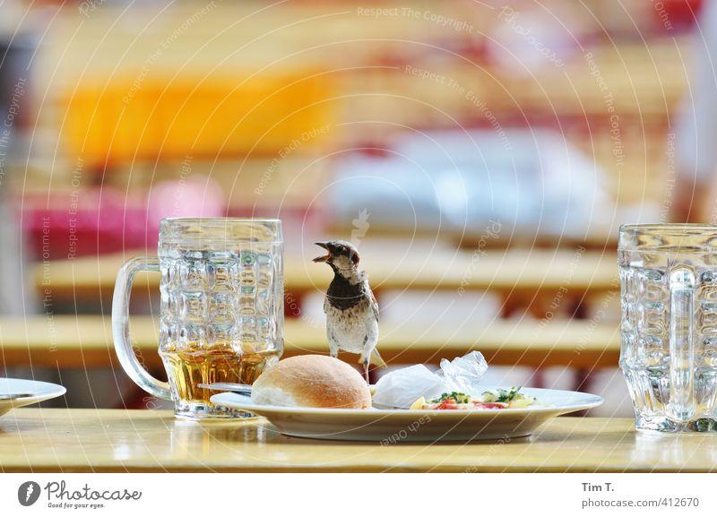 noch nen Bier . Lebensmittel Büffet Brunch Getränk Erfrischungsgetränk Alkohol Teller Glas Restaurant Essen trinken Tier Vogel 1 Dienstleistungsgewerbe Spatz