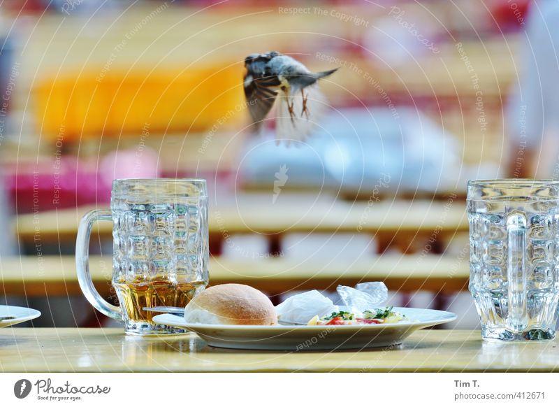 Abflug Stadtzentrum Altstadt Tier Vogel 1 Handel Spatz Biergarten Prater Glas Farbfoto Außenaufnahme Menschenleer Tag Unschärfe