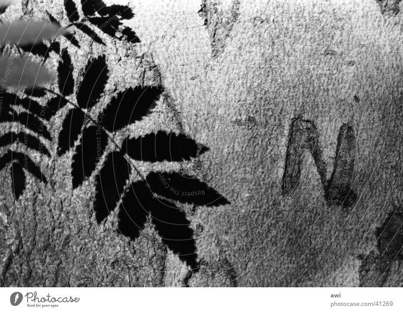 Eternal Love Baum Baumrinde Blatt Makroaufnahme Licht Treue Initial N Schwarzweißfoto Schatten