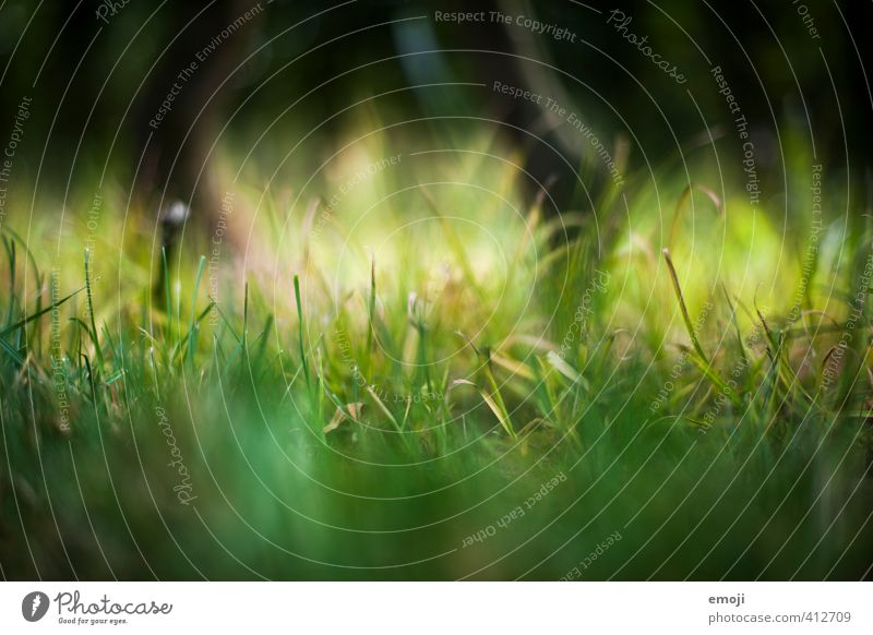 kitzeln Natur grün Pflanze Landschaft Umwelt Gras natürlich Garten
