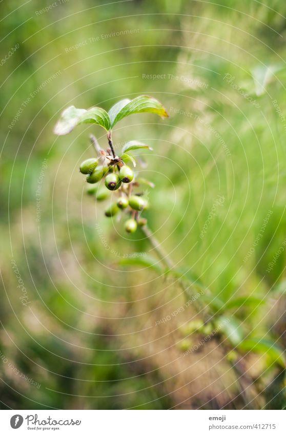 green Natur grün Pflanze Sommer Umwelt natürlich Grünpflanze