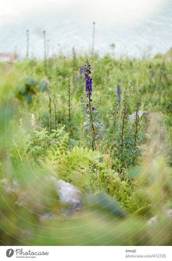 aufrecht Natur grün Pflanze Landschaft Blume Umwelt natürlich Sträucher violett