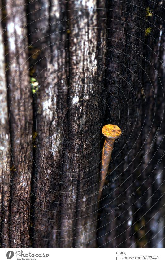 Alter, rostiger Nagel. Er präsentiert sich stolz und stilvoll auf verwittertem, altem Holz. nutzlos Metall Stahl Rost Holzbrett Traurigkeit Kontrast Einsamkeit