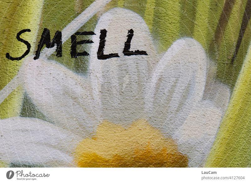 "Graffiti einer weiß-gelben Blume mit dem Schriftzug ""smell"" riechen Wandmalerei streetart Hauswand grün Fassade Mauer Wandmalereien Zeichen Kreativität Kunst"