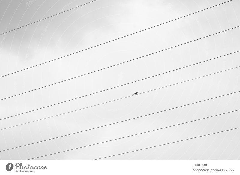 Einsamer Vogel auf dem Drahtseil einsamer Vogel Natur Vögel Himmel Freiheit Strom Stromtransport Energie Oberleitung Hochspannungsleitung Linien Überlandleitung