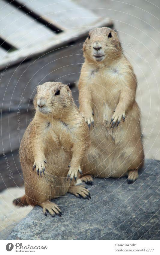 Jetzt guck' dir das an! Tier Freundschaft Tierpaar Wildtier stehen beobachten Neugier Fell Wachsamkeit Zoo Überraschung Interesse Schüchternheit Krallen staunen