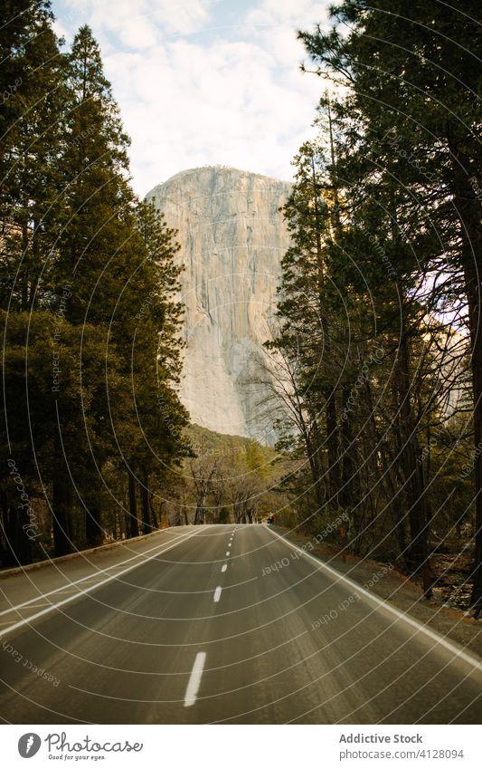Straße durch den Wald mit Bergblick Asphalt Berge u. Gebirge Tal Baum Natur Ausflug Ambitus rau Autobahn Freiheit Autoreise Weg Straßenrand Sommer Pflanze wild