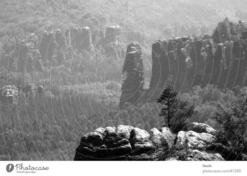 Sächsische Schweiz Sachsen Ferien & Urlaub & Reisen Baum Sandstein Berge u. Gebirge Schwarzweißfoto Bergwanderung