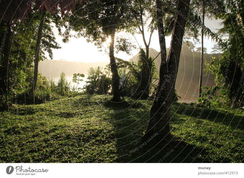 regenwald Urwald Amazonas Wald Baum Regen Regenwasser Sonne nass grün Natur Peru tambopata Nationalpark Erfrischung