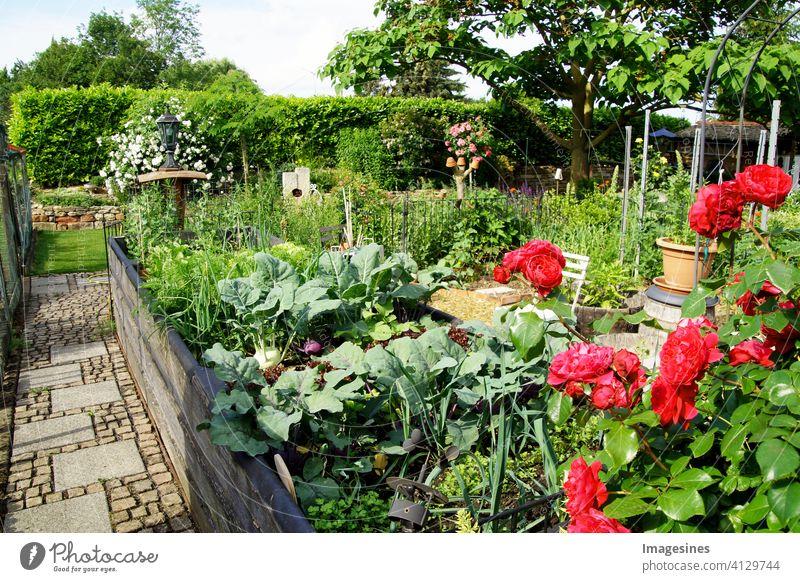 Privater Garten. Landschaftsgestaltung im Hausgarten, schöne Landschaftsgestaltung. Hochbeet mit Gemüse im Sommer modern Vorort Wohneigentum Schönheit