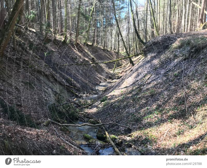 Wald nahe dem Illerbruch im Allgäu. Foto: Alexander Hauk Bayern Schwaben Natur Landschaft Farbfoto Deutschland Europa Außenaufnahme Hügel Menschenleer