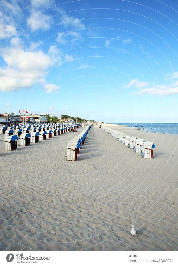 bestuhltes Gelände (20) mit Möwe strandkorb küste sand meer horizont möwe wolken himmel schönes wetter fahne dorf aufgereiht ordnung