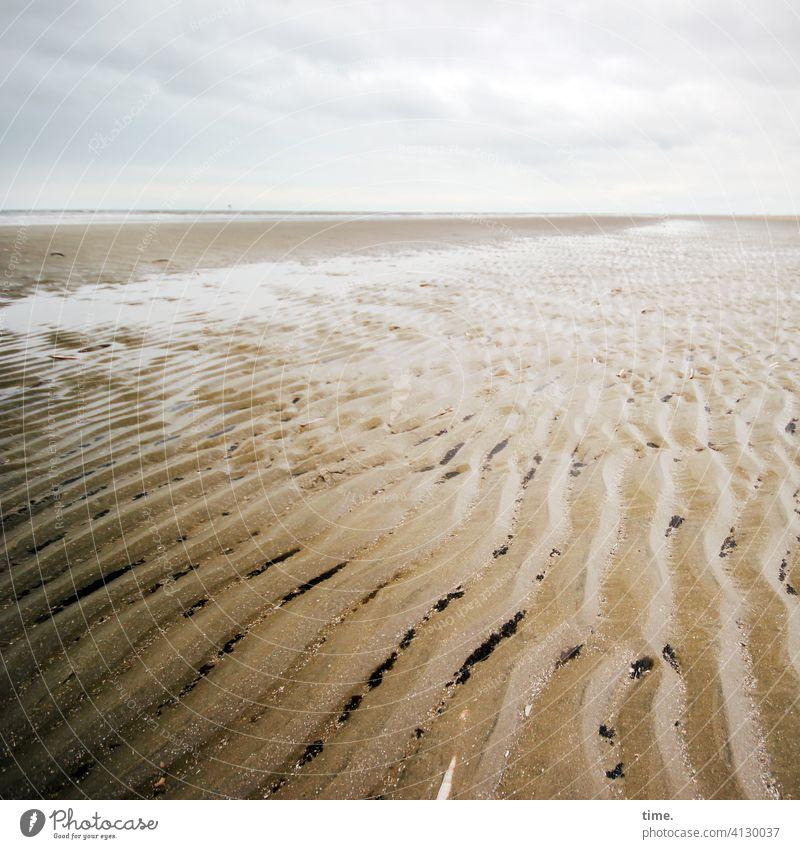 Lebenslinien #142 strand sand horizont wasser muscheln wellenlinien wolken himmel menschenleer Priel watt